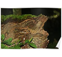Stumped with Moss Poster