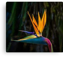 Bird of Paradise Flower (EH) Canvas Print