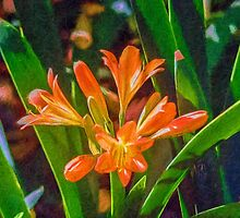 Clever Clivia by Ray Warren
