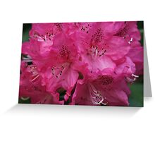 Mt. Dandenong Rhododendrons,Victoria. Greeting Card