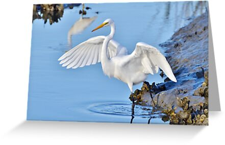 Showing Off by Kathy Baccari