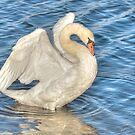 Angel Swan by Kathy Baccari