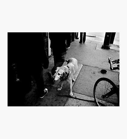 B&W Lonely Lab Photographic Print