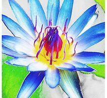 Lotus Flower by hurlz