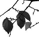 Last Leaves  by JerryCordeiro