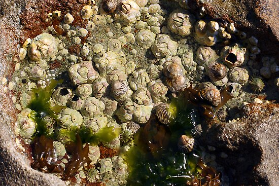 Rock pool life by Timothy John Keegan