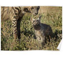 Silver back hyena Poster