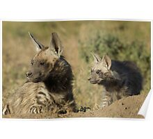 Silver back hyena and pup Poster