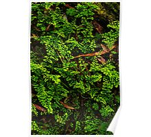 Forest Floor. Poster