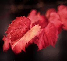 Autumn Rouge by Ray Warren