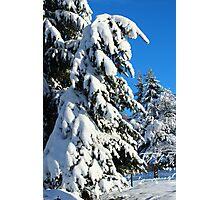 Garden in Winter II Photographic Print