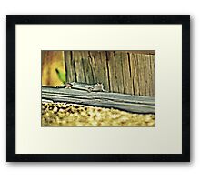 20090107- DSC05602 Googong Lizard f Framed Print