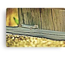 20090107- DSC05602 Googong Lizard f Canvas Print