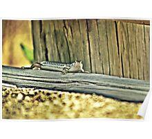 20090107- DSC05602 Googong Lizard f Poster