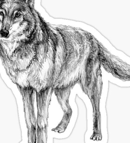 Grey wolf illustration Sticker