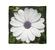 Beautiful Blossoming White Osteospermum Scarf