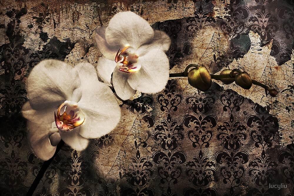orchidee by lucyliu