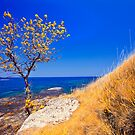 autumn coast line by plamenx