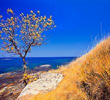 autumn coast line by plamenx
