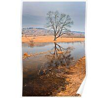 tree portraite in November Poster