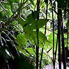 Secret Garden #1 by PB-SecretGarden