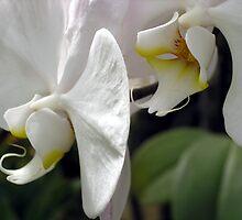 Orchid #2 by PB-SecretGarden