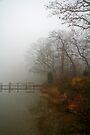Fall Fog by Eileen McVey