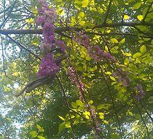 Purple Branch by Hayley R. Howard