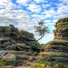 Brimham Rocks North Yorkshire 5 by Colin  Williams Photography
