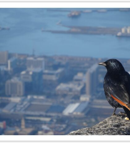 Bird over looking Cape Town Sticker