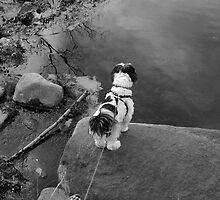Shih on a rock by jclegge