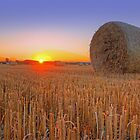 Bales at Sunset 1 by Colin  Williams Photography