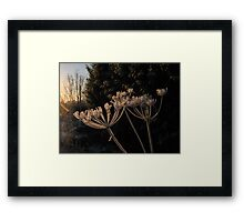 Frosty Fronds Framed Print
