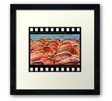 Nostalgia Collection • Islands of The Bahamas • Conch at the Beach on New Providence Island Framed Print
