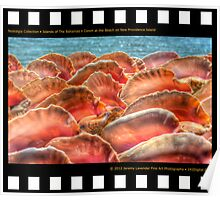 Nostalgia Collection • Islands of The Bahamas • Conch at the Beach on New Providence Island Poster