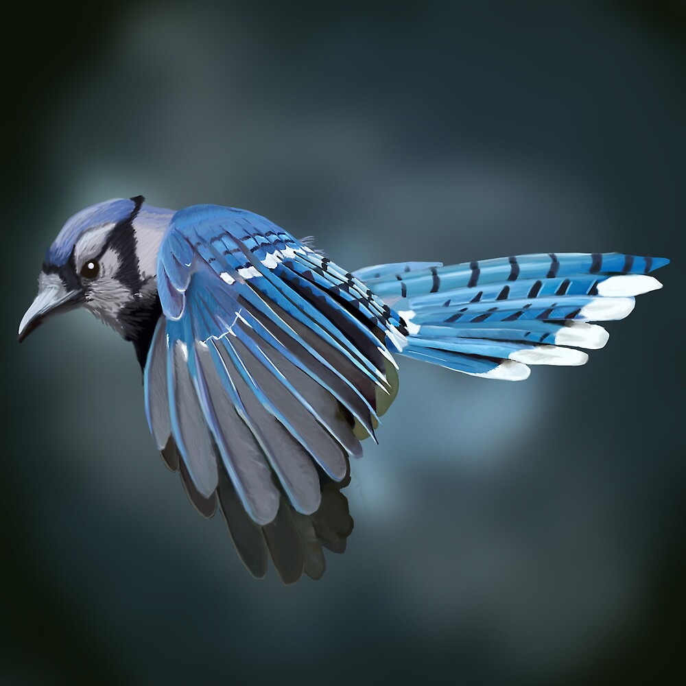 Blue Jay by Dan McKechnie