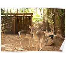 Golden Deers Poster