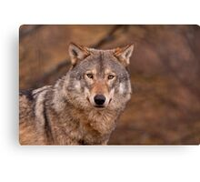 Close up of Wolf Canvas Print