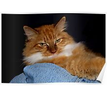 Cat In the Laundry Basket Poster