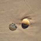 Sea shell by pvhonk