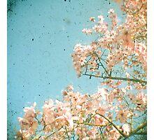 Magnolia Tree Photographic Print