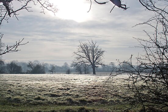 Frost In December by Dave Godden