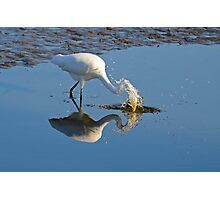 GOING FOR THE FISH (EGRET) Photographic Print