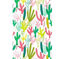 Cacti  Photographic Print