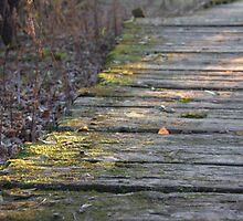 Mossy Boardwalk at Sunset  by Rich Fletcher