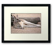 Kangaroo Lazing Framed Print