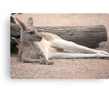 Kangaroo Lazing Canvas Print