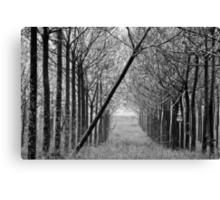 arranged -one Canvas Print