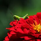 Grasshopper by JLOPhotography