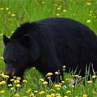 The Black Bear by Chris  Gale